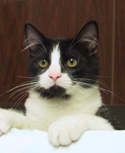 Chapel Hill Pet Supplies Adoption Dogs Cats